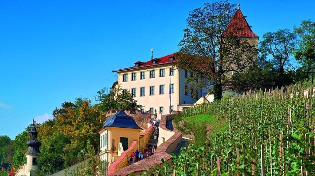 Odolnost Pražanů vůči vínu musím zvýšit! Tak se rozhodl Karel IV. a začal zakládat vinice kolem Prahy a to až v okruhu 20kilometrů od hradeb! Historikové se přiklánějí ke skutečnosti, […]